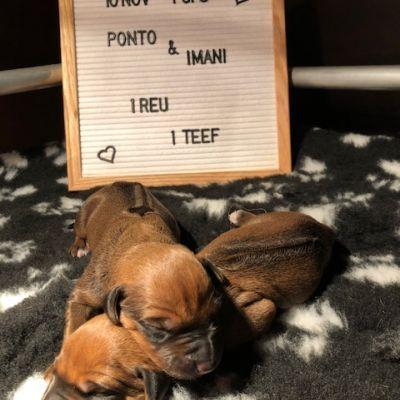Hoera, de puppy's zijn geboren!
