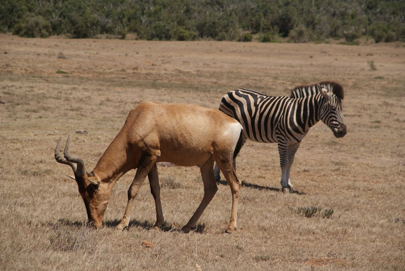 Wildlife in Addo Elephant Park ©Fair Mundo Travel