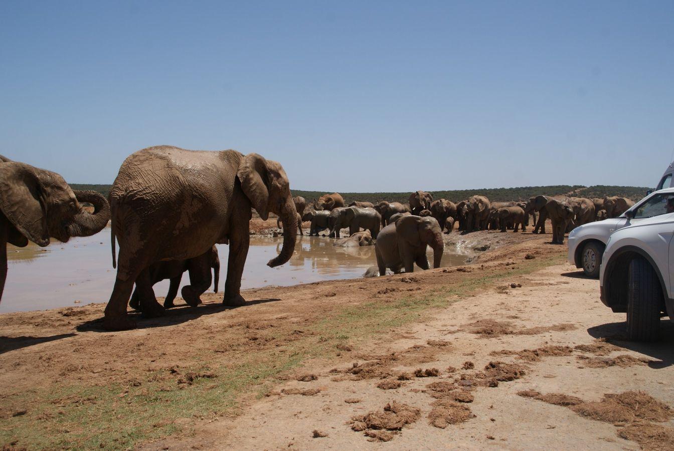 Olifanten in Addo Elephant Park ©Fair Mundo Travel