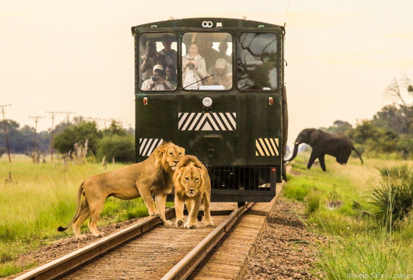 Nostalgische trein waarmee u van of naar de lodge reist. De spoorlijk vormt de grens van Hwange NP. Grote kans dat u wild spot onderweg!