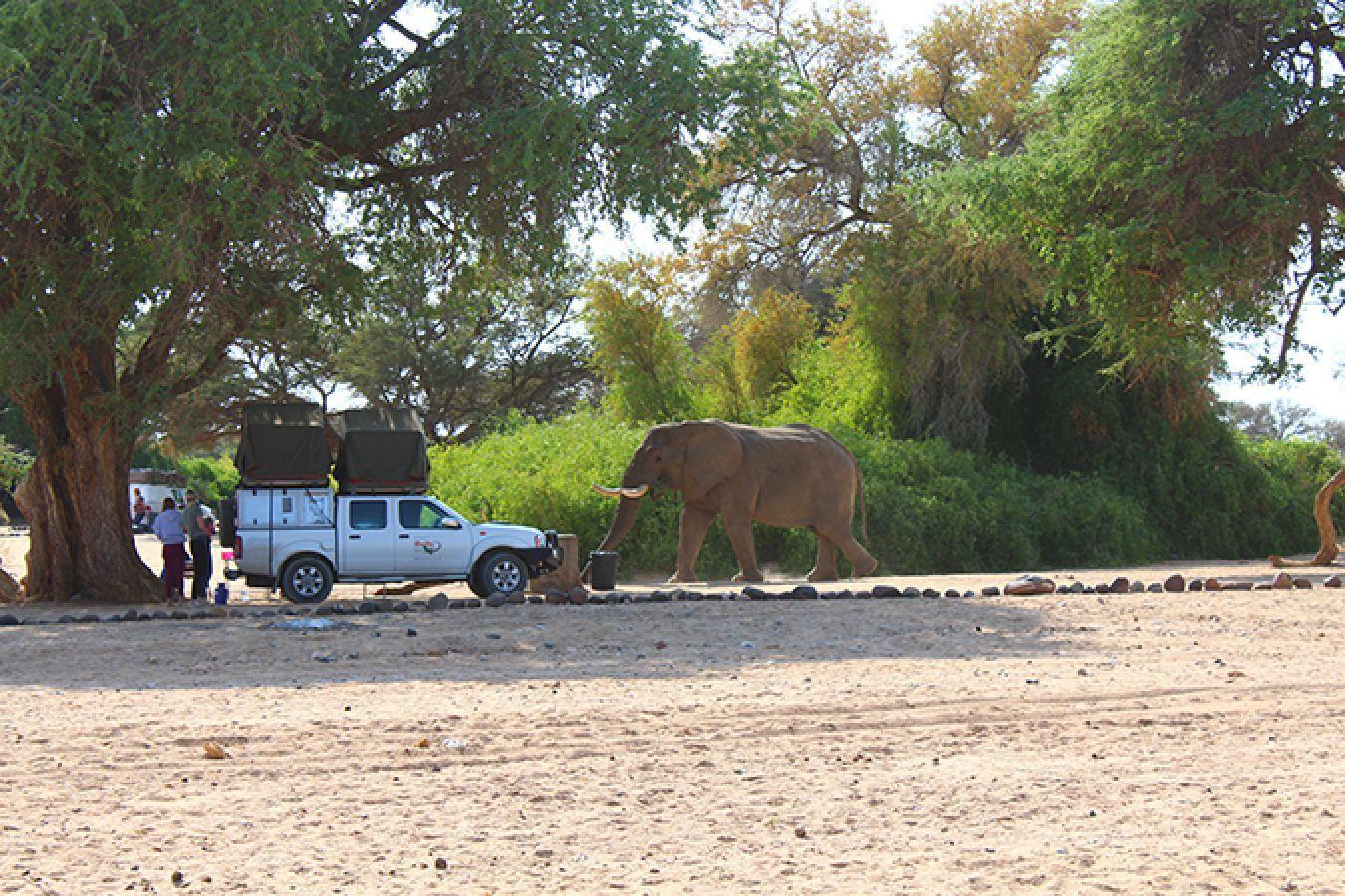 Brandberg White Lady Lodge olifant
