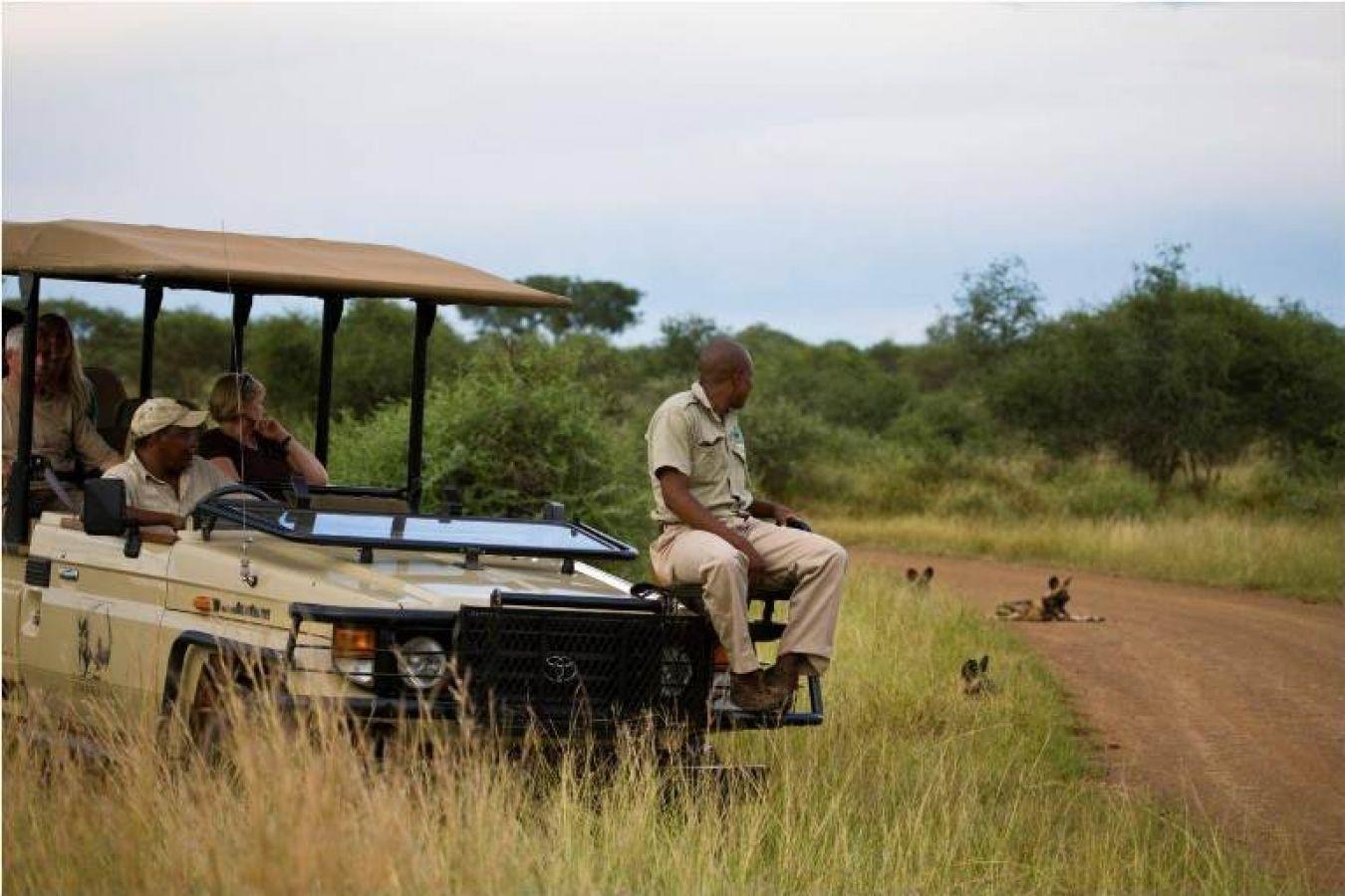 Buffalo Ridge Safari Lodge safari