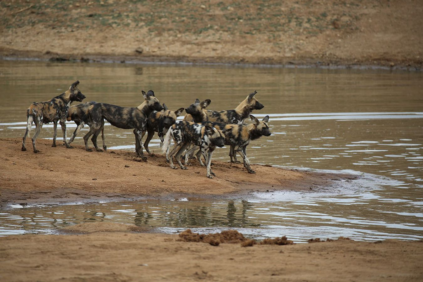 Erindi Game Reserve wild dogs - ©Fair Mundo Travel