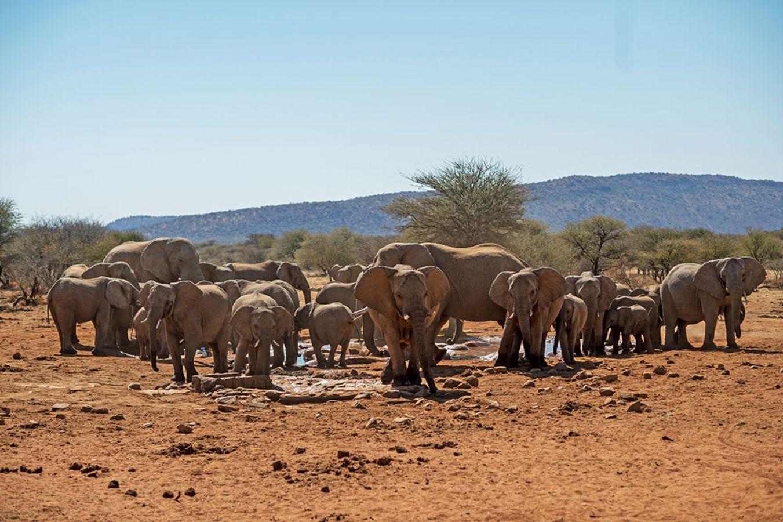Erindi Game Reserve olifanten