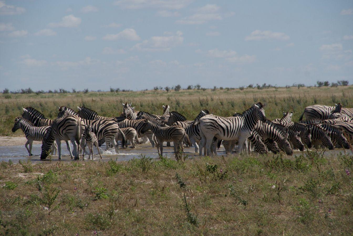Etosha National Park - ©Fair Mundo Travel