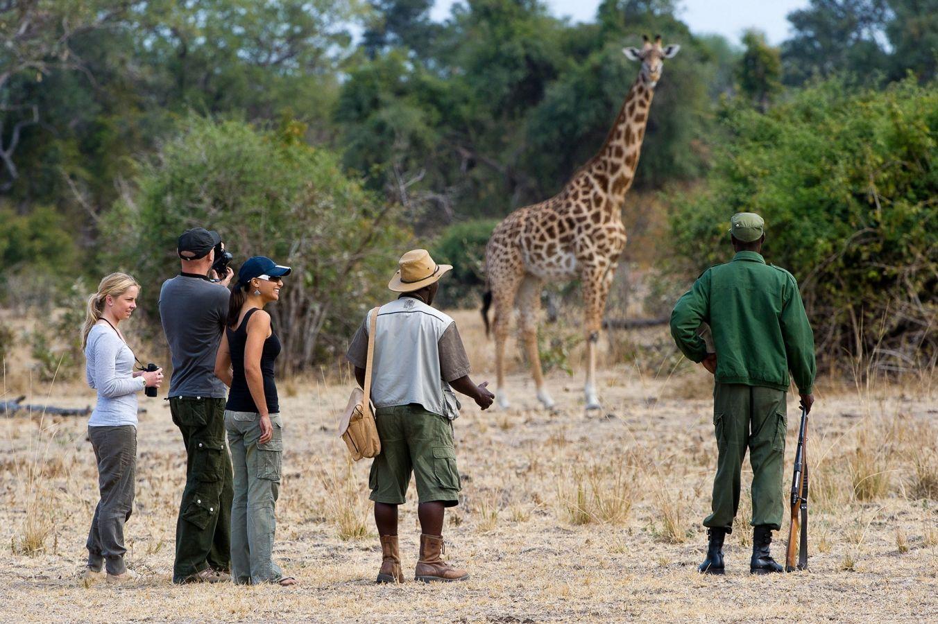 Flatdogs Camp giraf tijdens wandelsafari