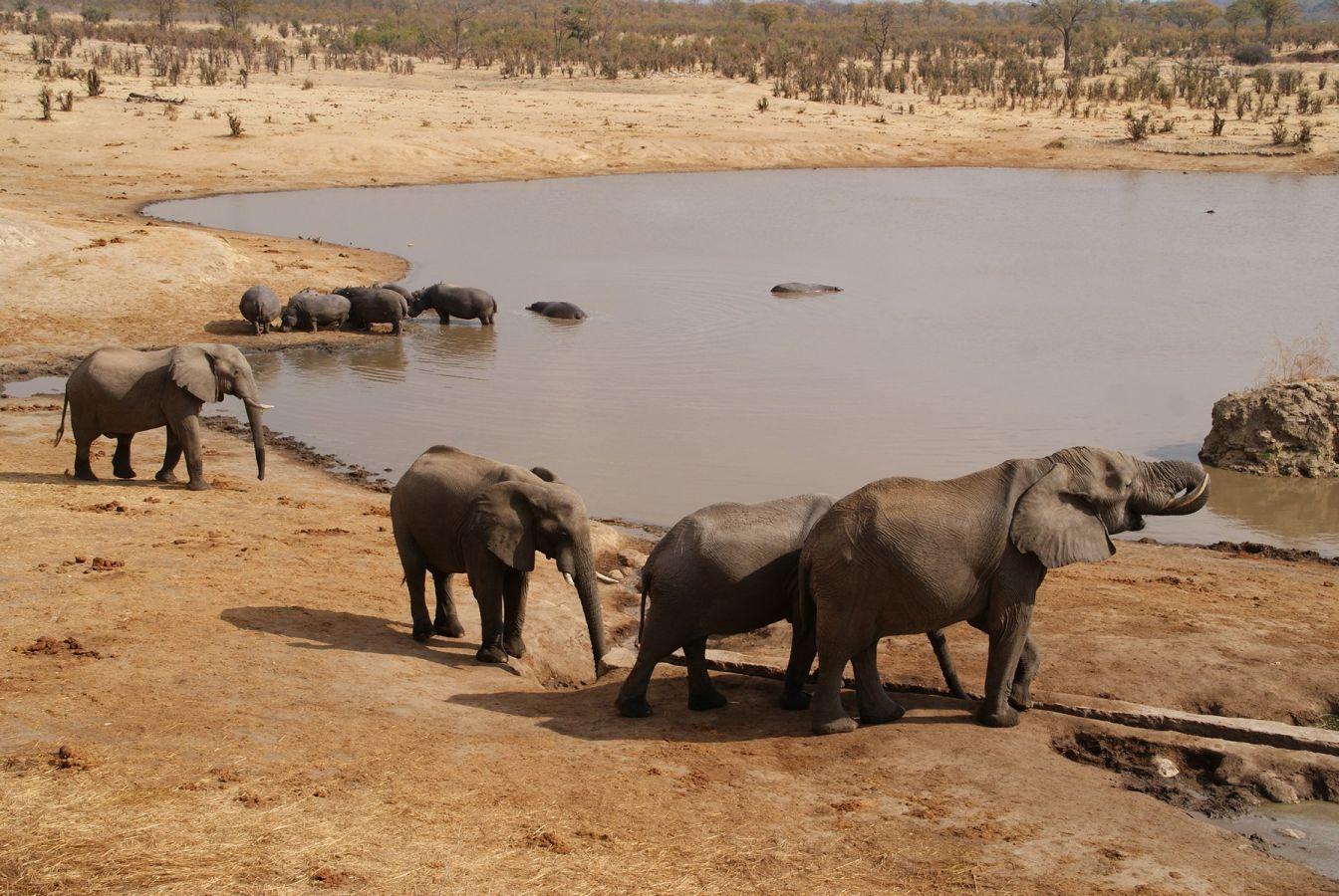 Hwange National Park - ©Fair Mundo Travel