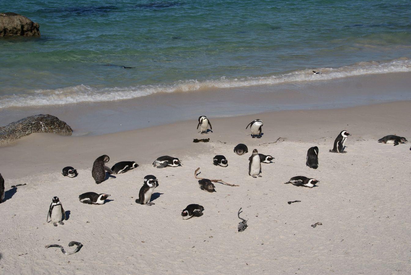 Kaapstad - Boulders' Beach - ©Fair Mundo Travel