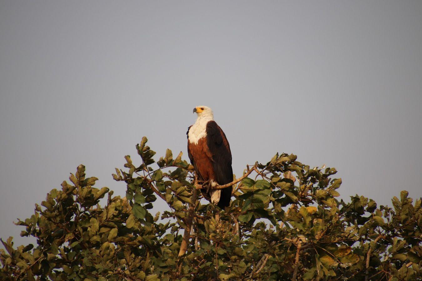 Kafue National Park - ©Fair Mundo Travel