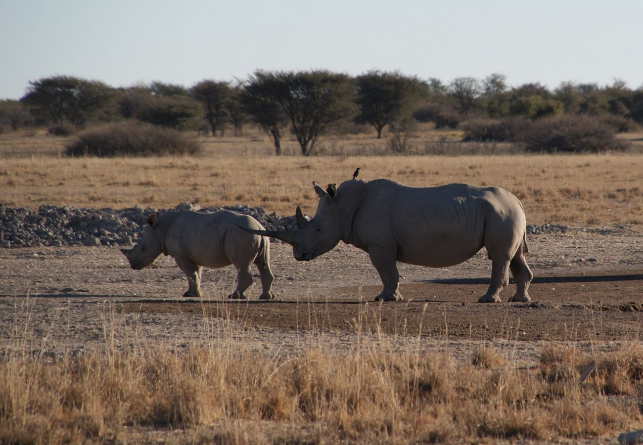 Khama Rhino Sanctuary - ©Fair Mundo Travel