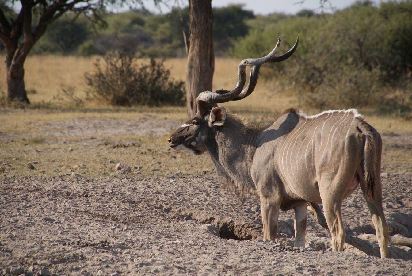 Khama Rhino Sanctuary - ©Fair Mundo Travel