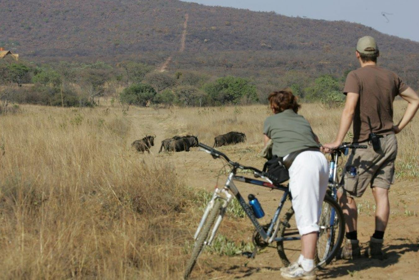Kololo Game Reserve mountainbiken gnoe's