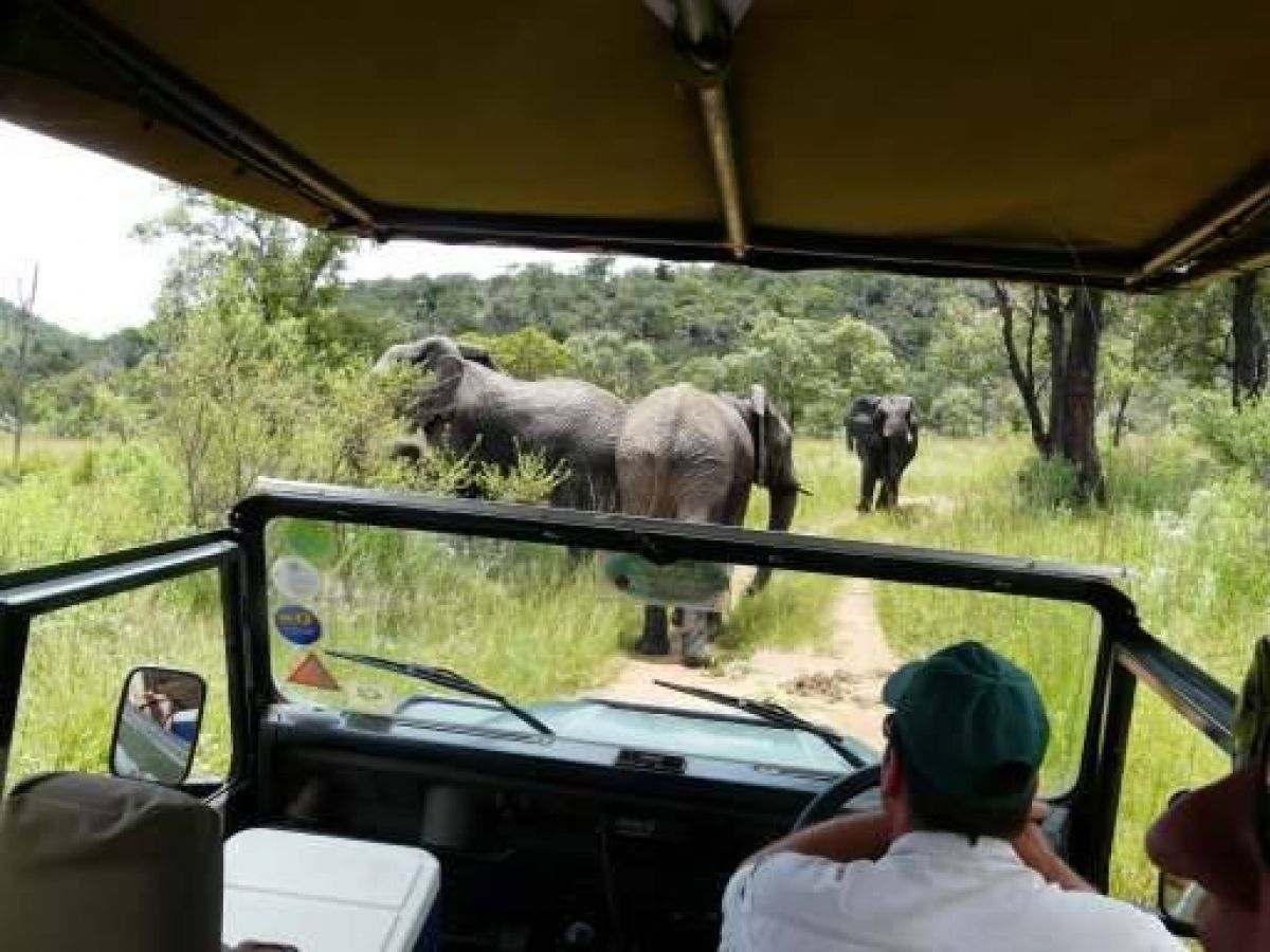 Kololo Game Reserve game drive in Welgevonden Game Reserve - ©Fair Mundo Travel