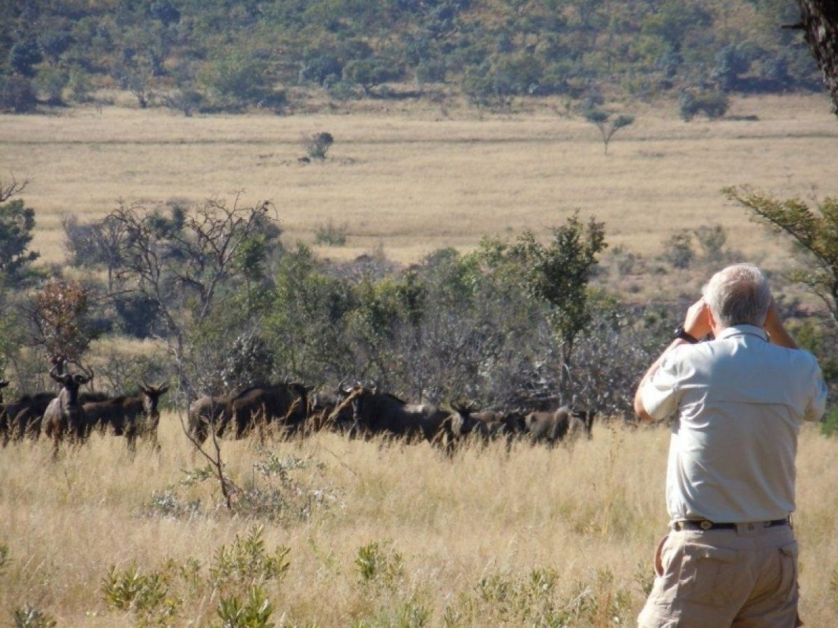 Kololo Game Reserve wandelen gnoe's