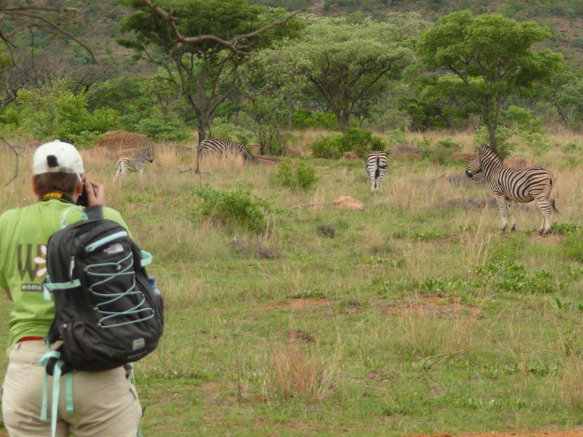 Kololo Game Reserve wandelsafari zebra's