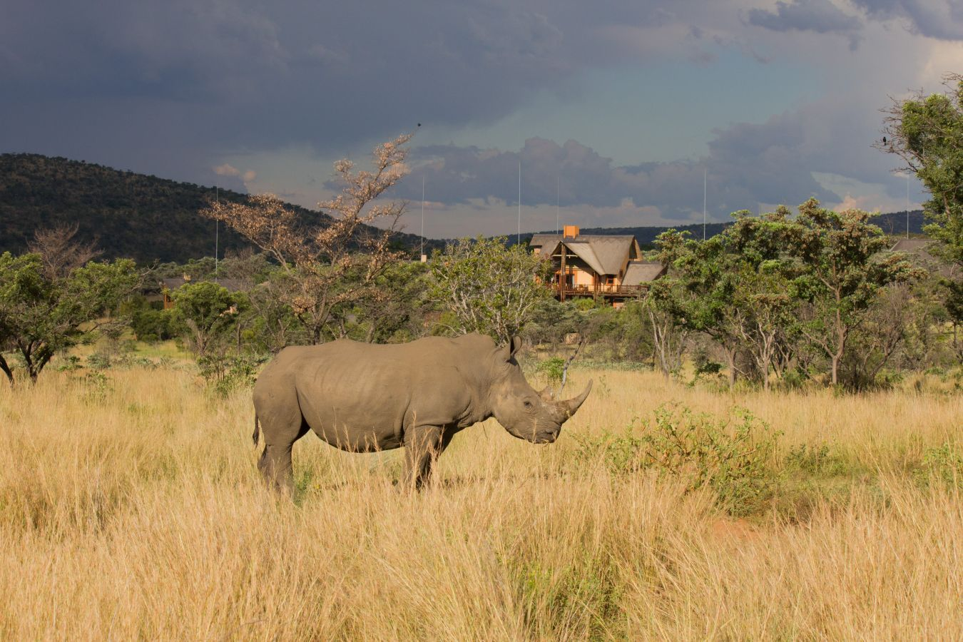 Kololo Lodge neushoorn