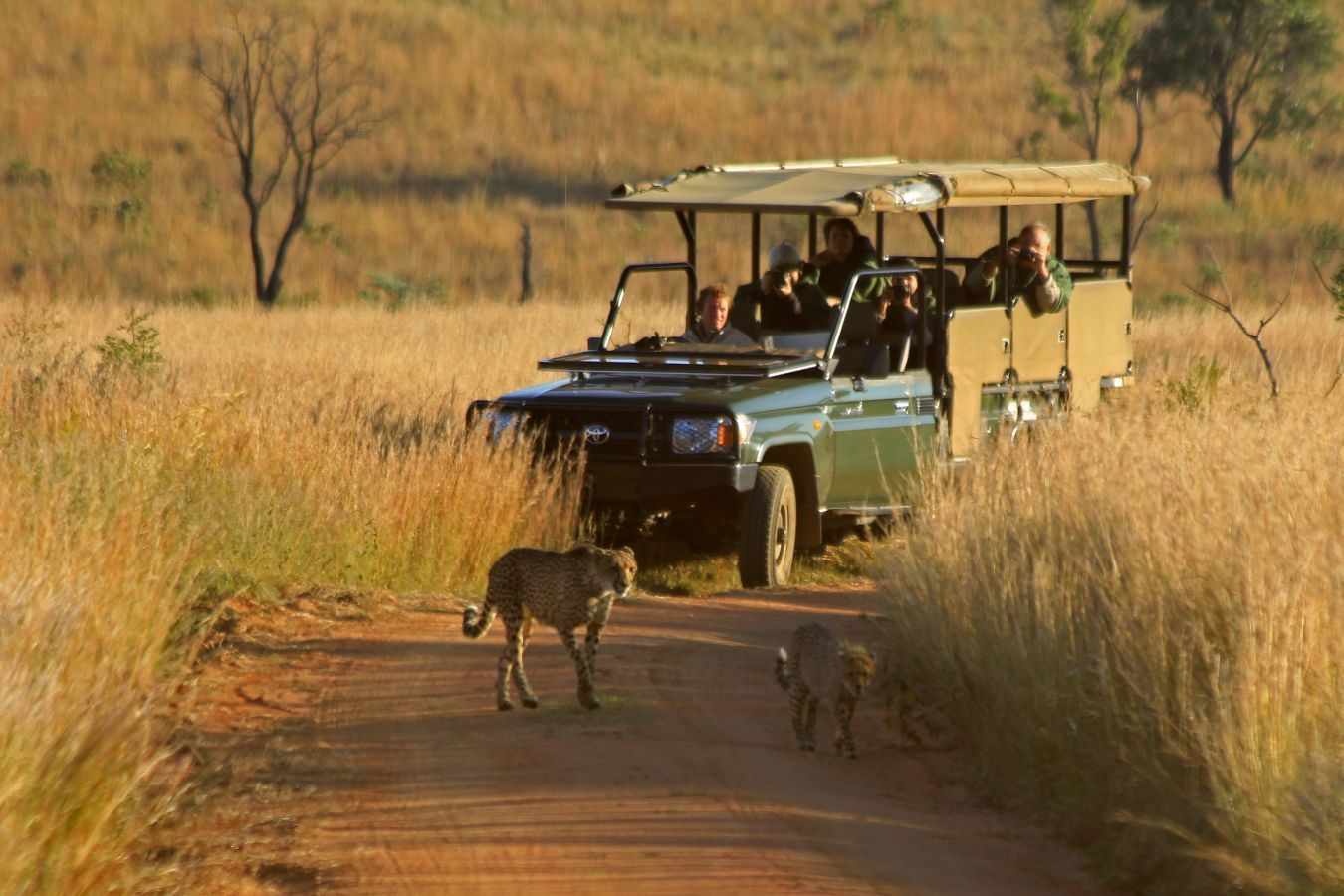 Kololo Lodge game drive cheeta's