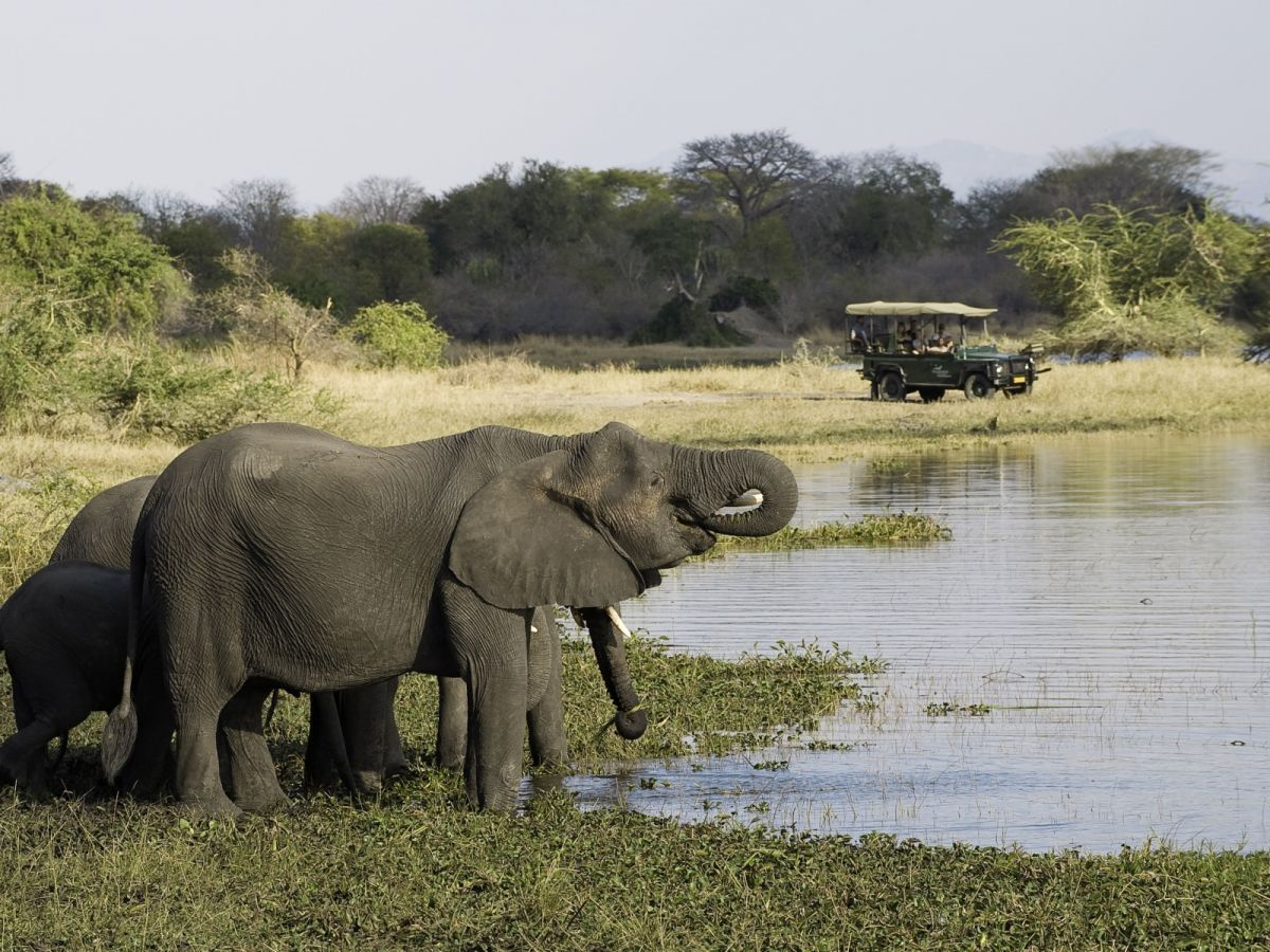 Liwonde National Park game drive