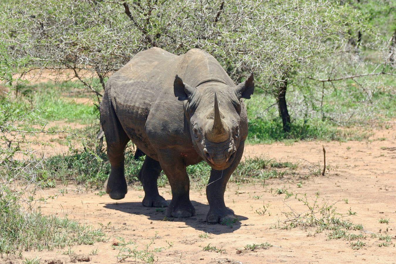Majete Wildlife Reserve zwarte neushoorn