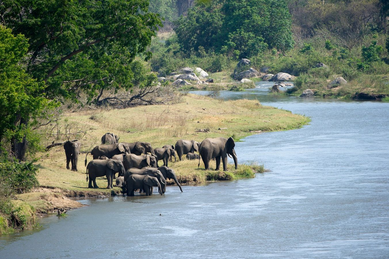 Majete Wildlife Reserve olifanten aan Shire River