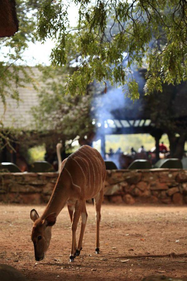 Mlilwane Restcamp