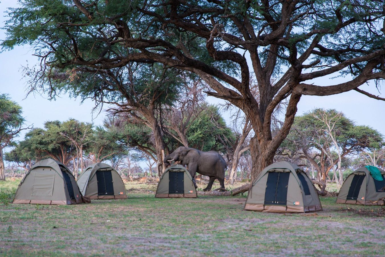 Olifant in camp
