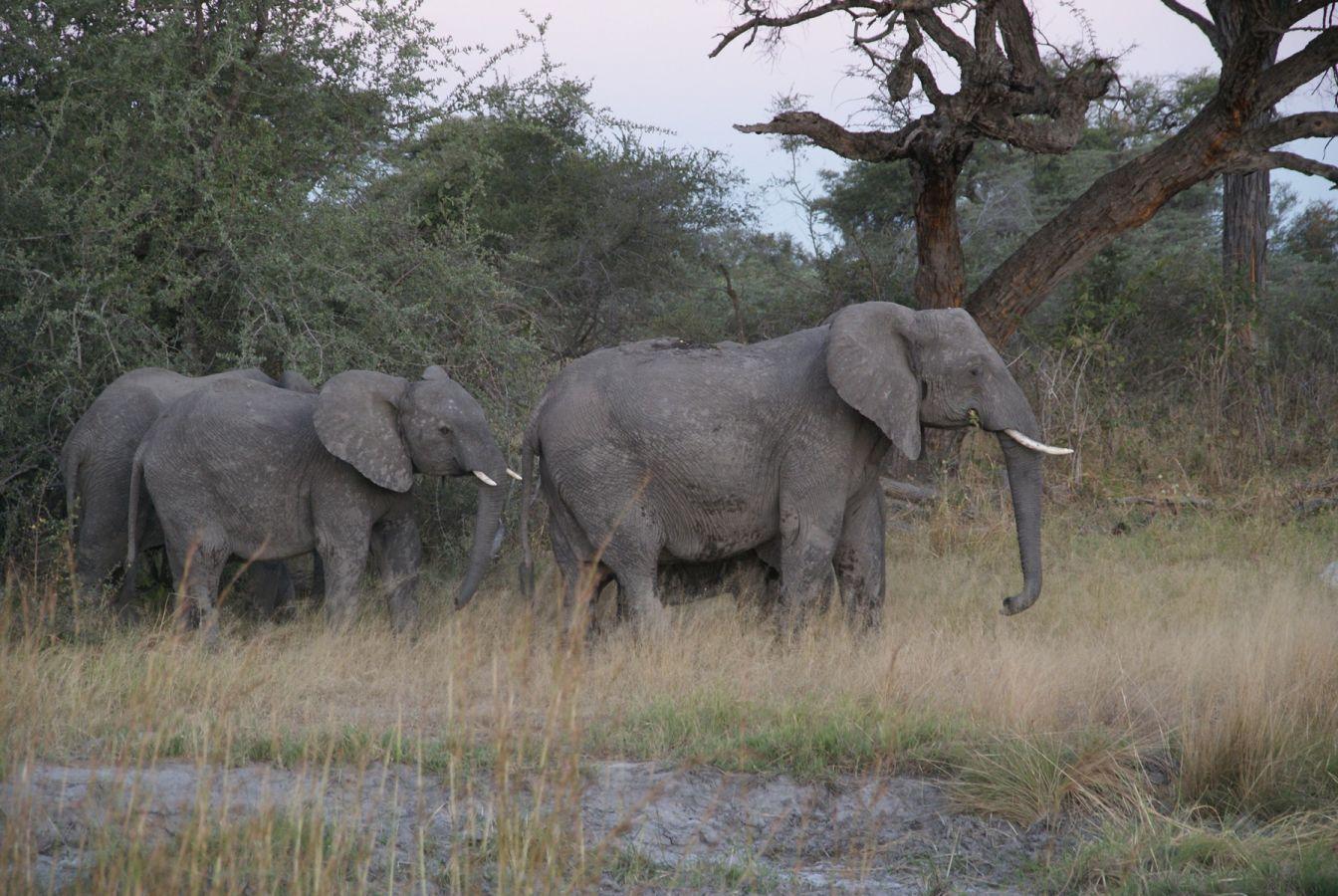 Mudumu National Park - ©Fair Mundo Travel