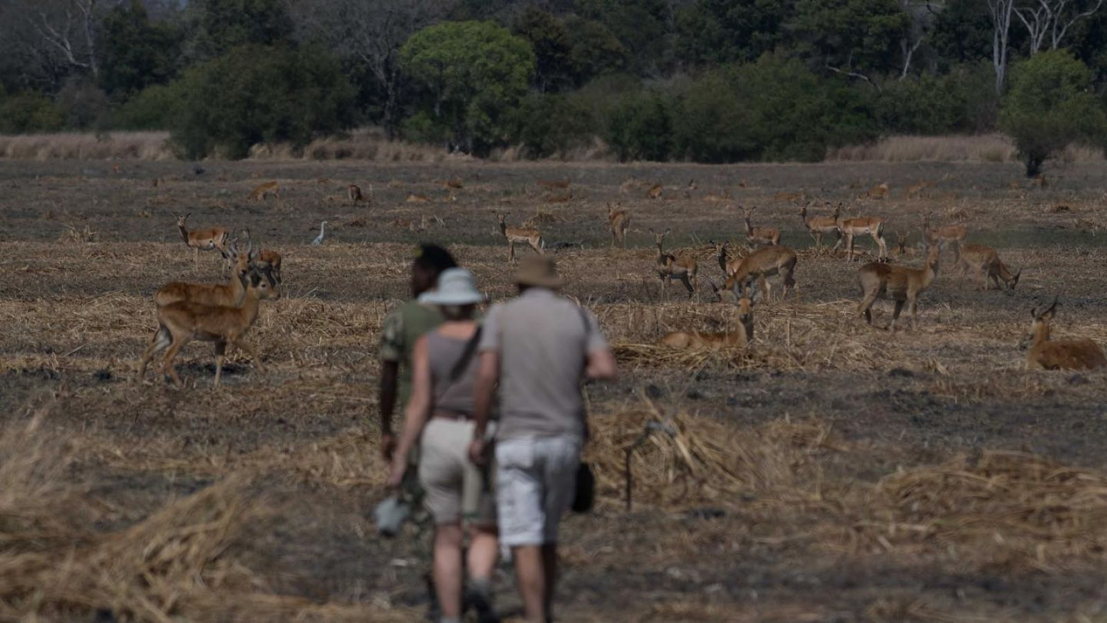 Musekese Camp walking safari