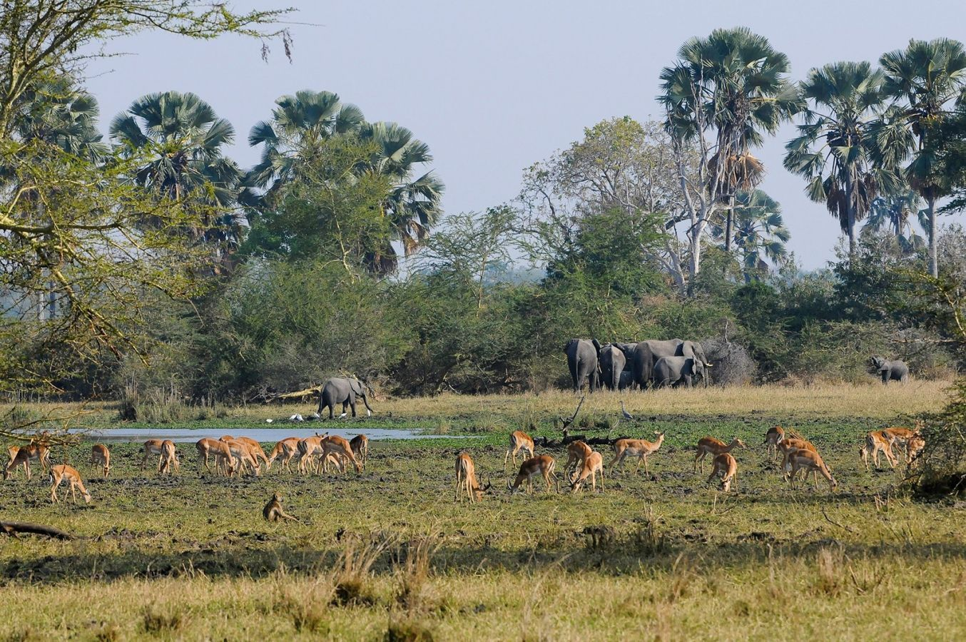 Mvuu Camp plains