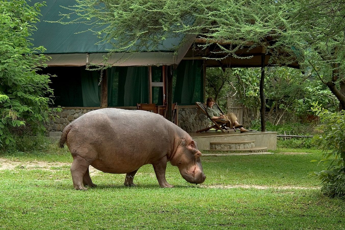 Mvuu Camp nijlpaard voor chalet