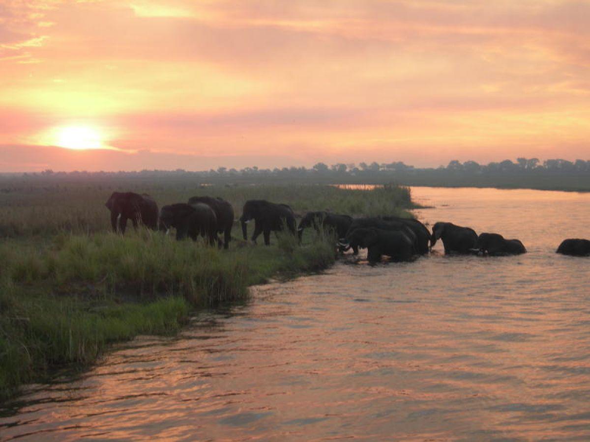 Ngepi Camp olifanten