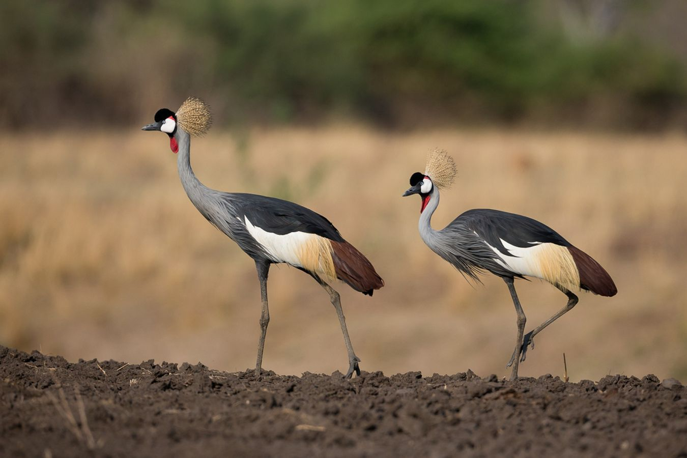 Nkonzi Camp crowned cranes