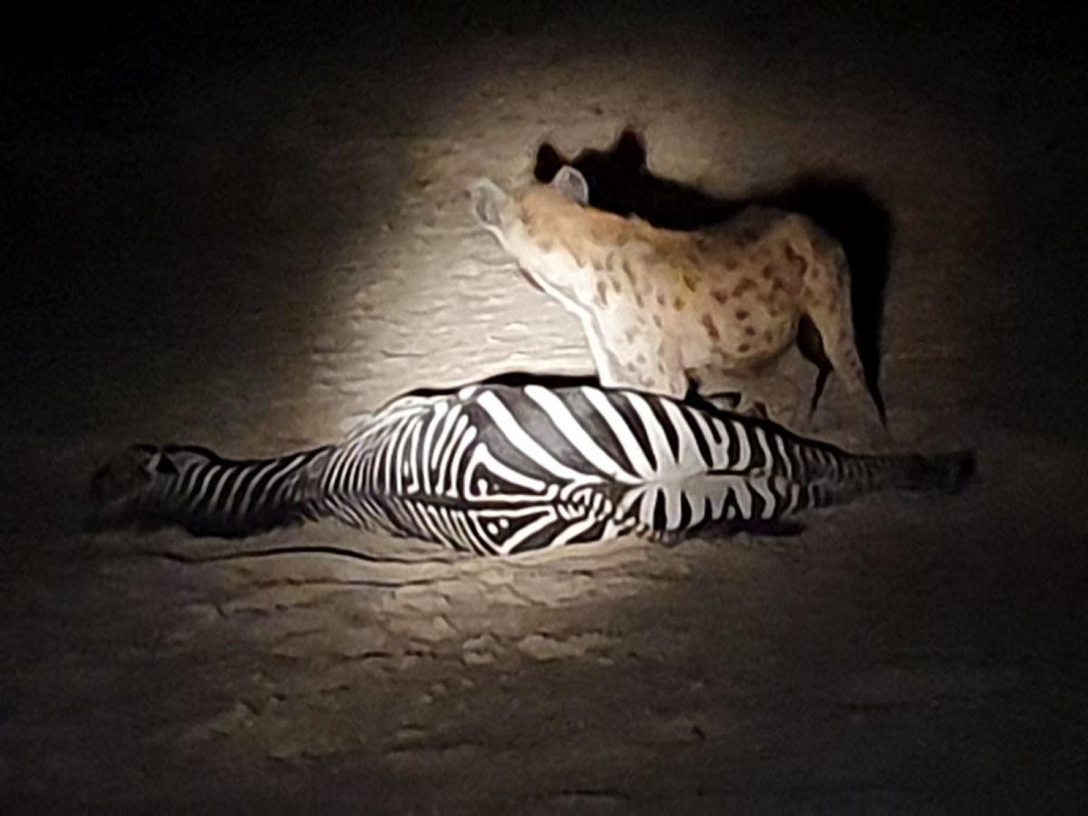 Nkonzi Camp night drive hyena haalt zebra neer - ©Fair Mundo Travel