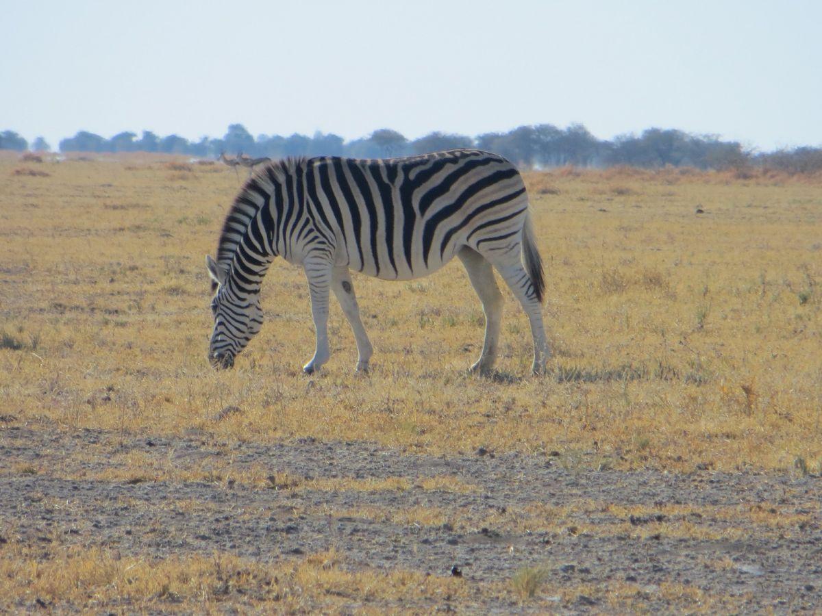 Nxai Pan National Park - ©Fair Mundo Travel