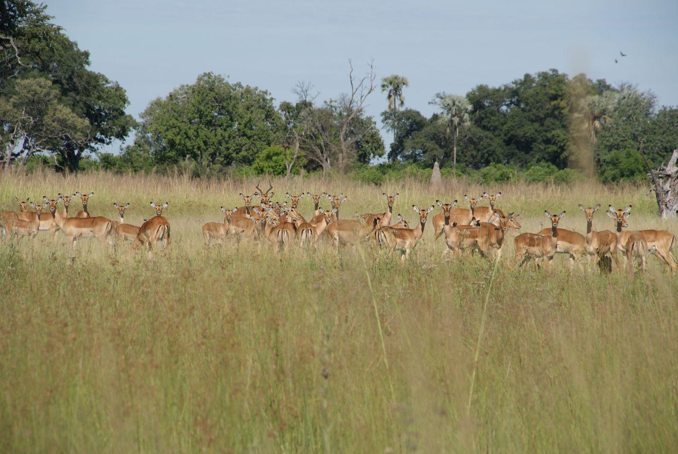 Okavango Delta - ©Fair Mundo Travel