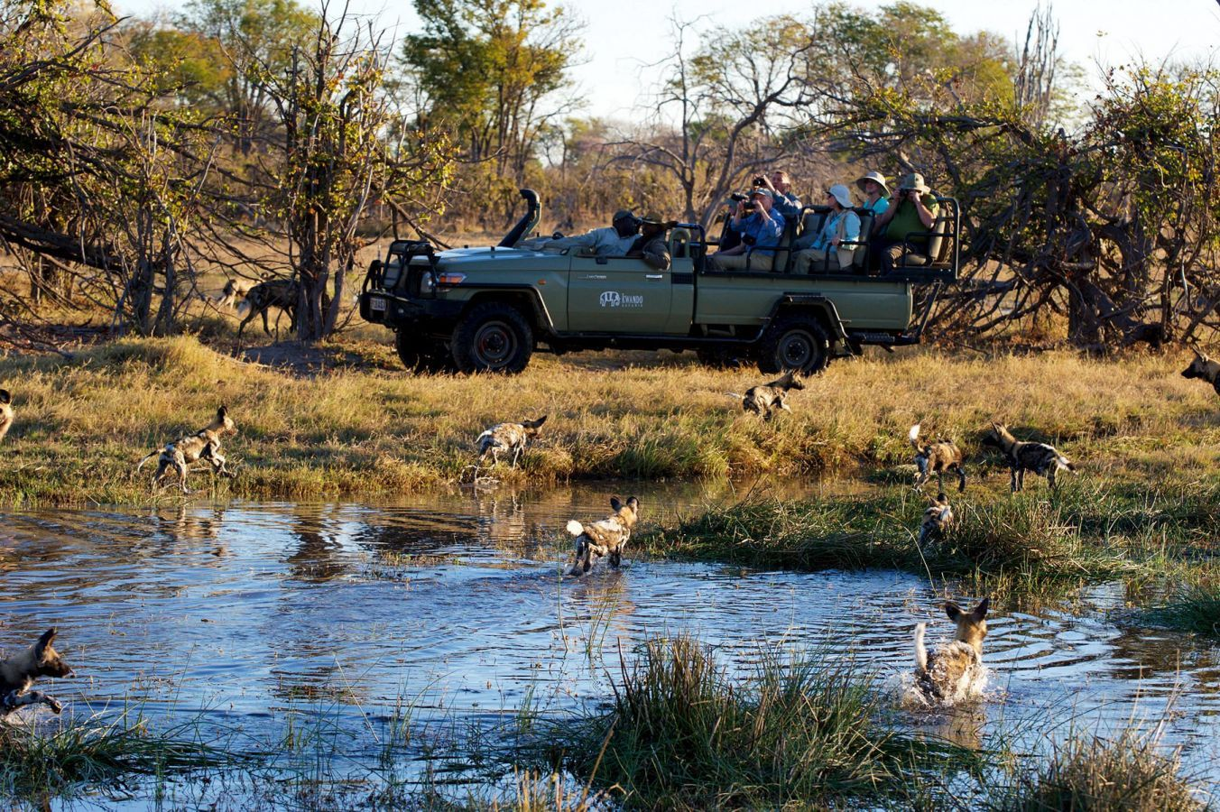 Okavango Delta - game drive