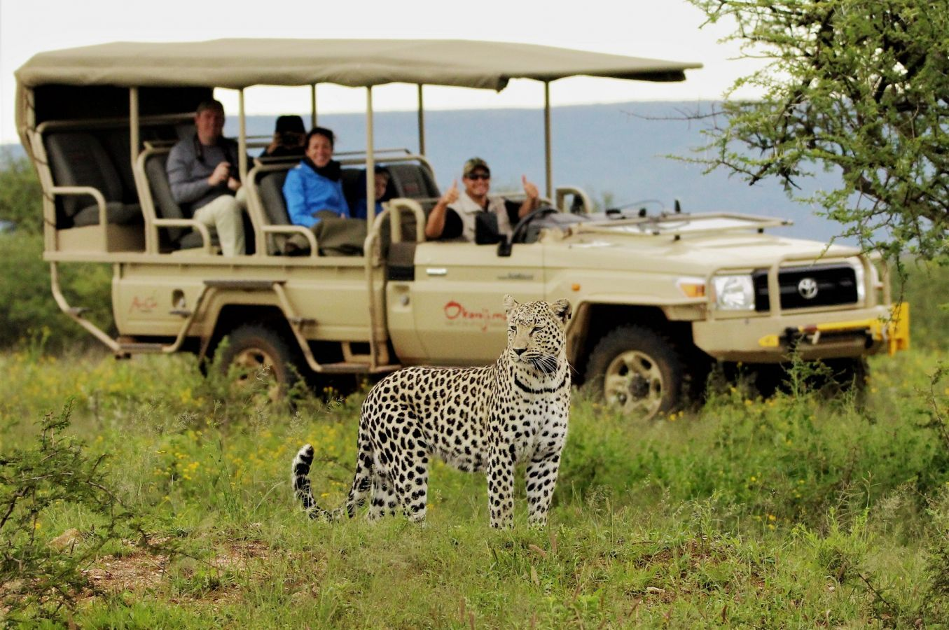 Game drive in Okonjima Nature Reserve
