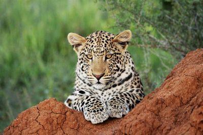 Okonjima Nature Reserve en AfriCat Foundation