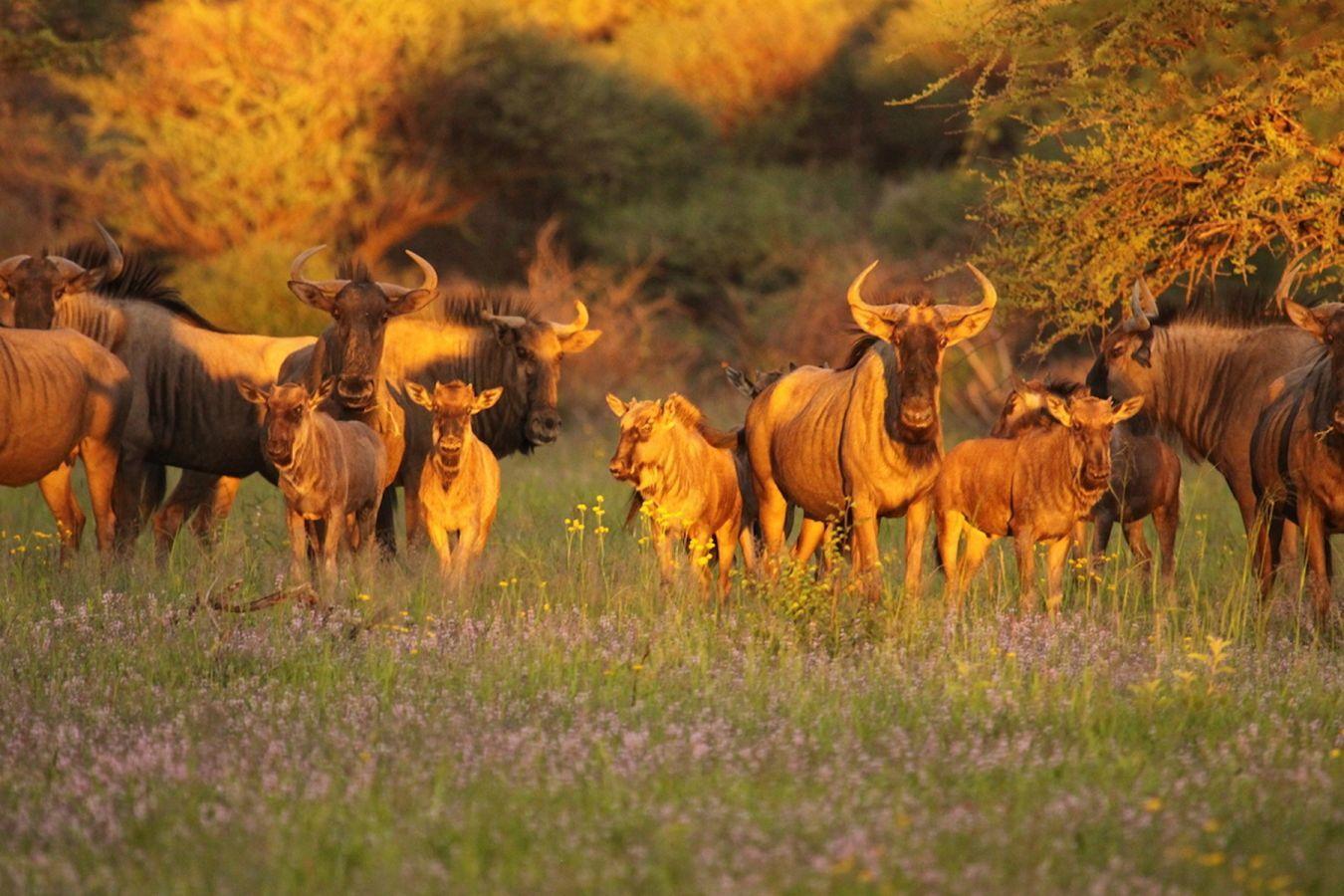 Gnoe's in Okonjima Nature Reserve
