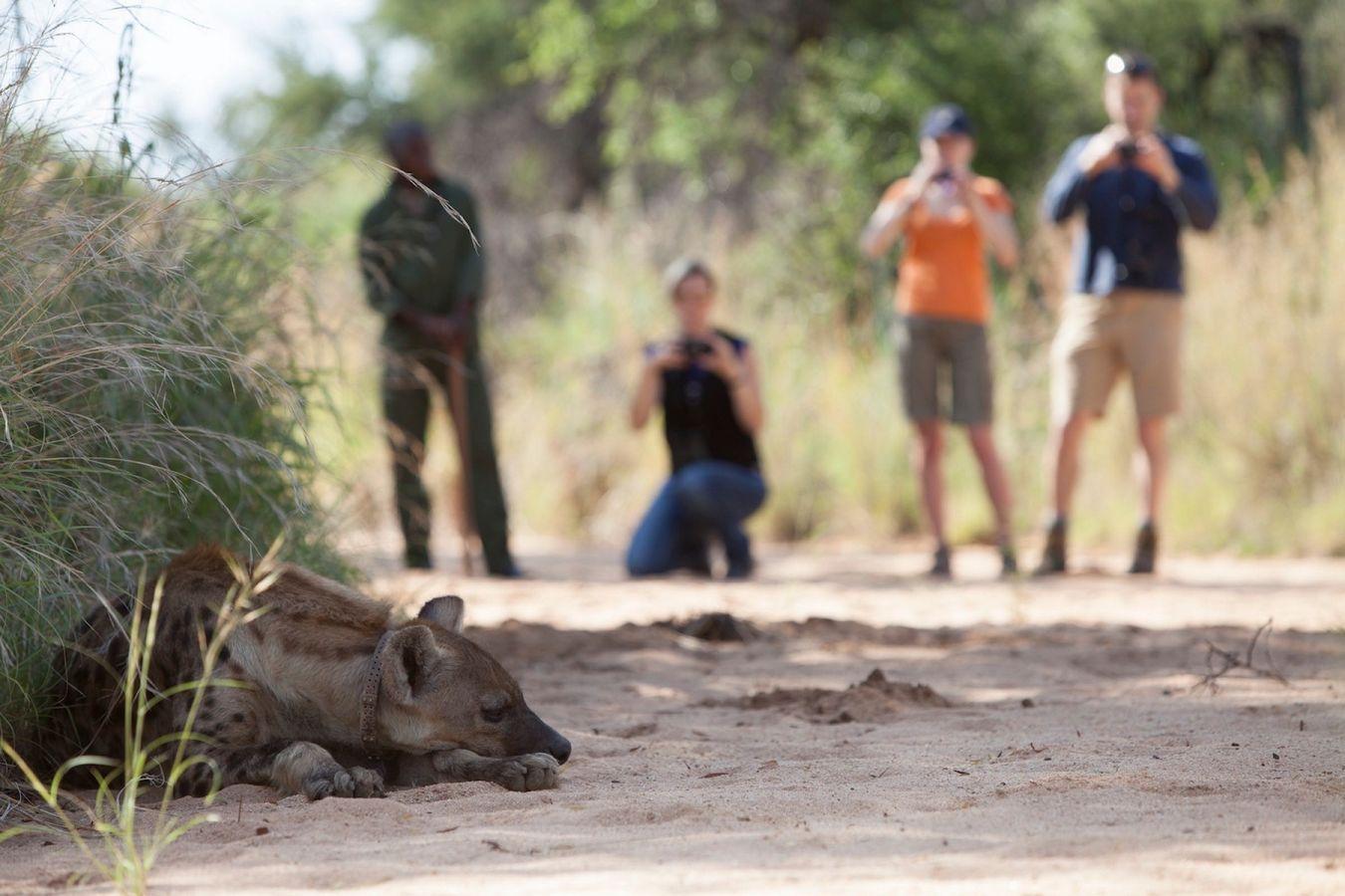Bush walk in Okonjima Nature Reserve