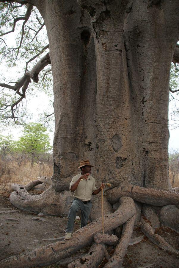 Planet Baobab - ©Fair Mundo Travel