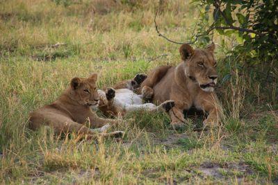 Savuti - Chobe National Park