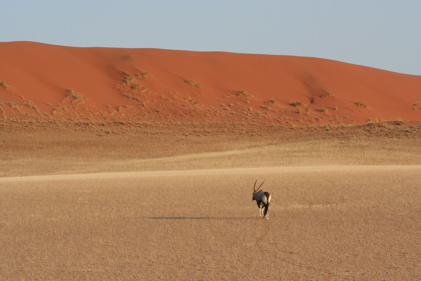 Gemsbok in landschap Sossusvlei