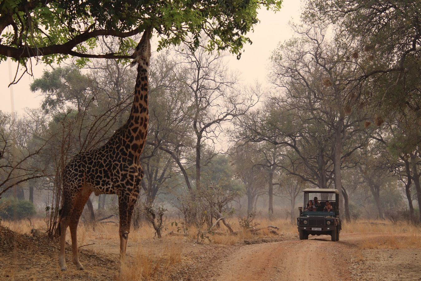 South Luangwa National Park - ©Fair Mundo Travel