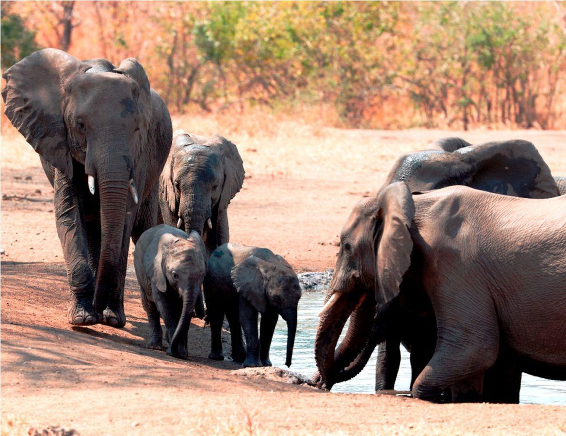 Thawale Lodge olifanten
