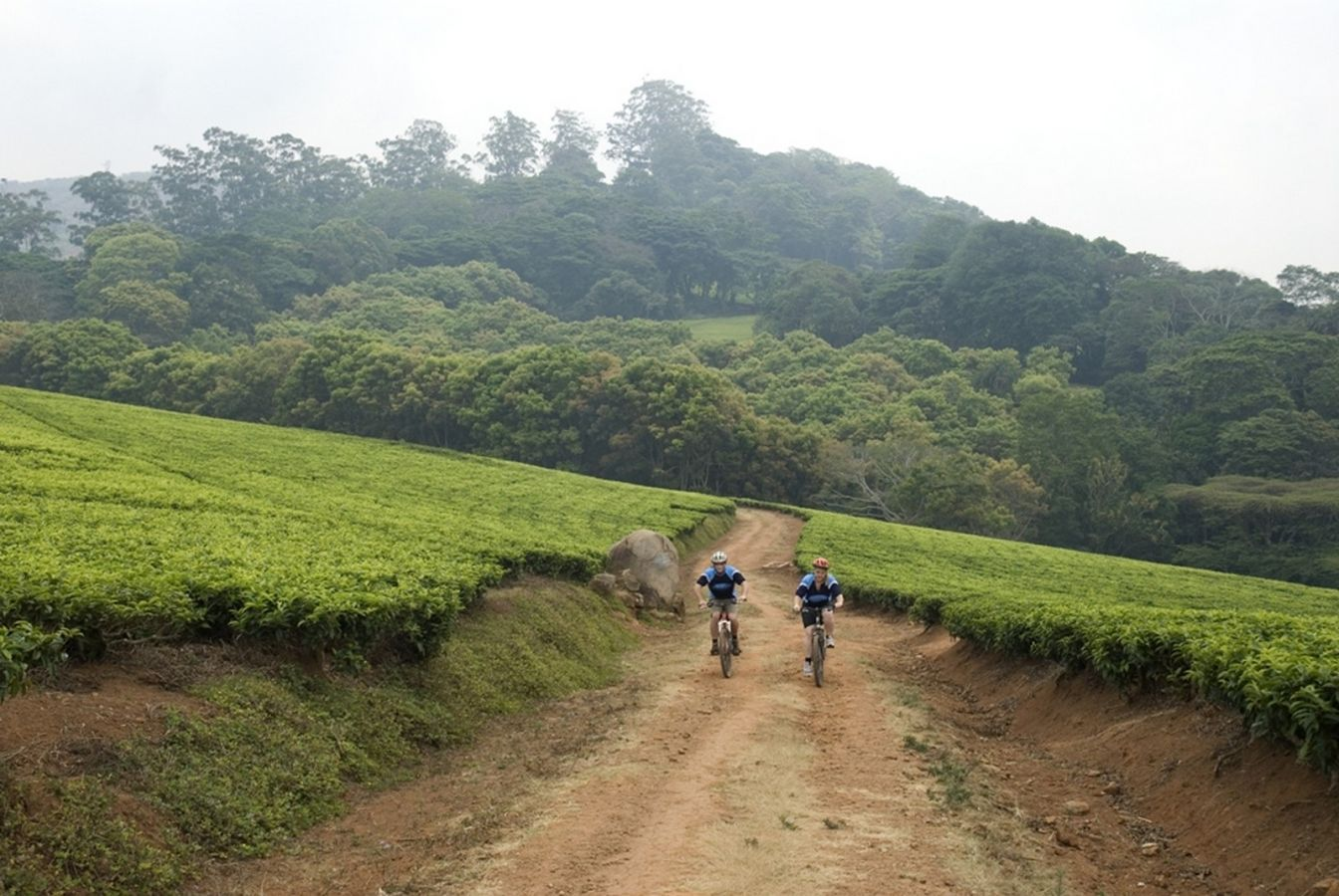 Thyolo mountainbiken tussen theeplantages