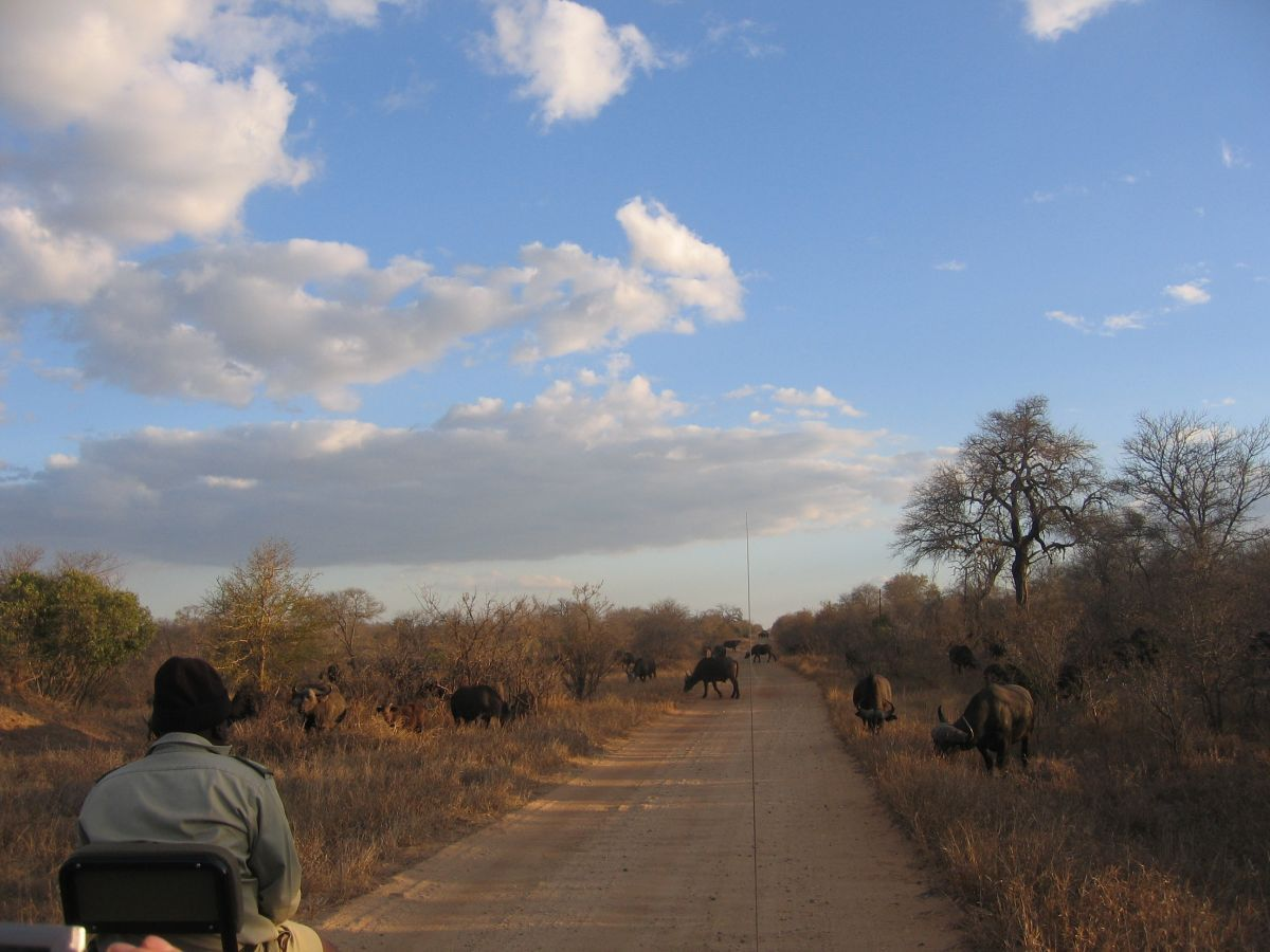 Timbavati Game Reserve - game drive - ©Fair Mundo Travel