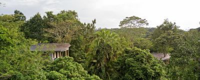 Turaco Treetops
