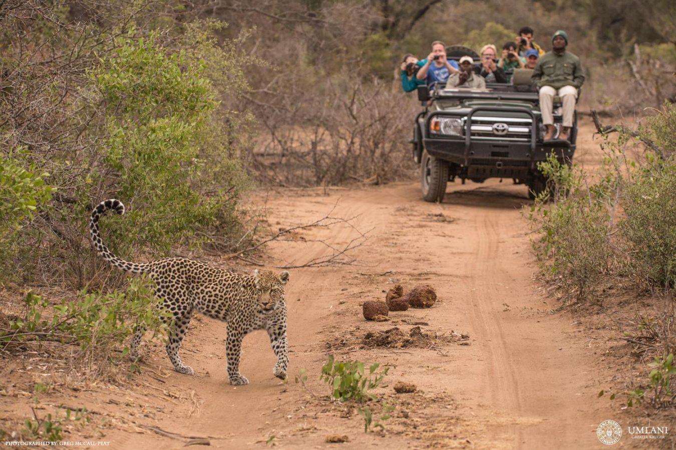 Umlani Bushcamp game drive luipaard