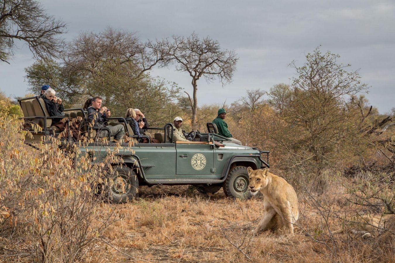 Umlani Bushcamp game drive leeuw